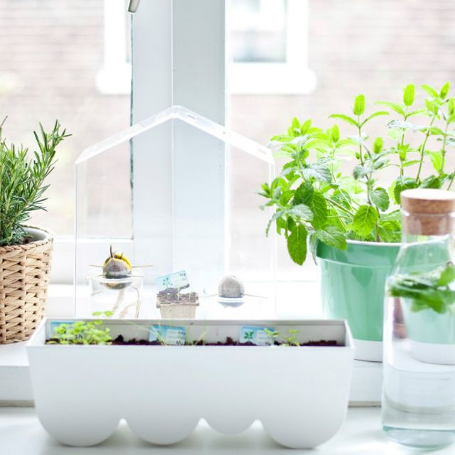 How to Grow a Herb Garden if You Live in a Tiny Apartment