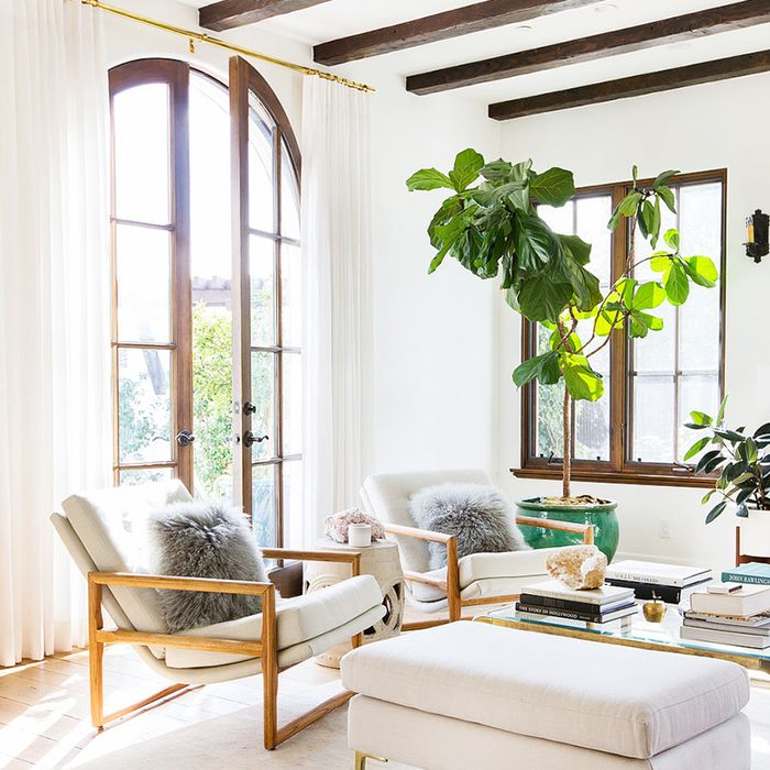How to Decorate With Large Indoor Plants in Every Home | MyDomaine