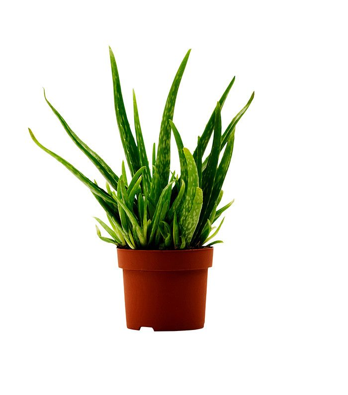 The Best Indoor Plants to Clear the Air, Literally