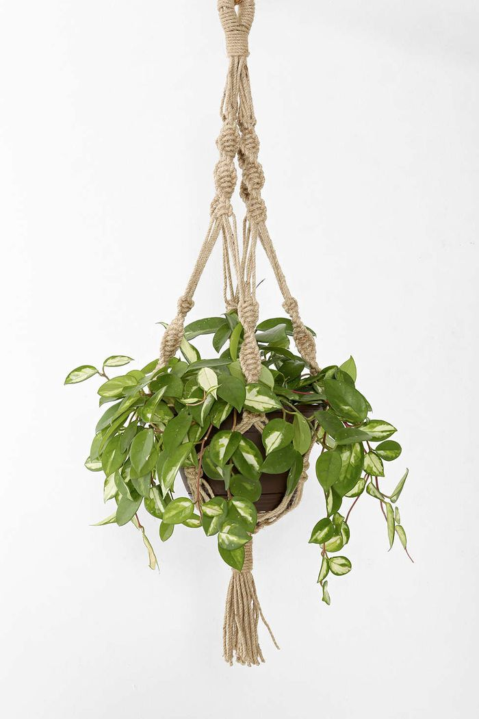 5 Houseplants That Are Quot Living Breathing Antidepressants