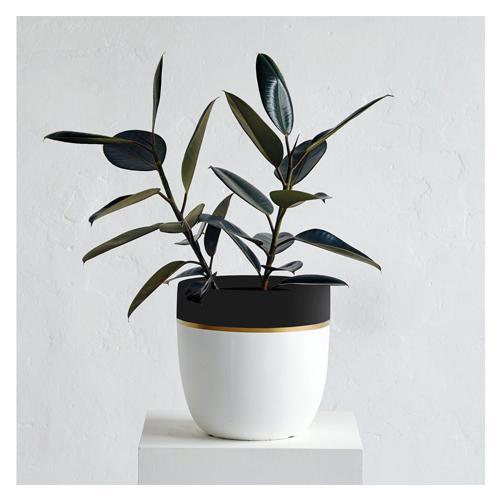 Design Twins Crown Pot
