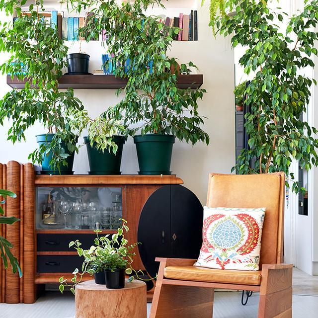 The Health Benefits of Indoor Plants