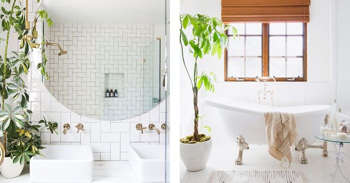 psa these 5 bathroom plants will transform your shower mydomaine - Bathroom Plants
