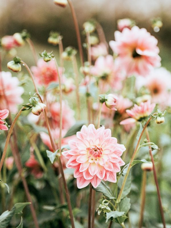 The 10 most beautiful flowers in the world mydomaine mightylinksfo
