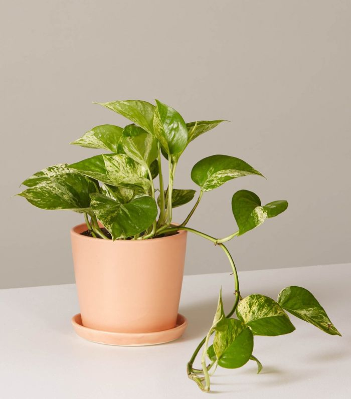 the best desk plants to breathe new life into your space mydomaine