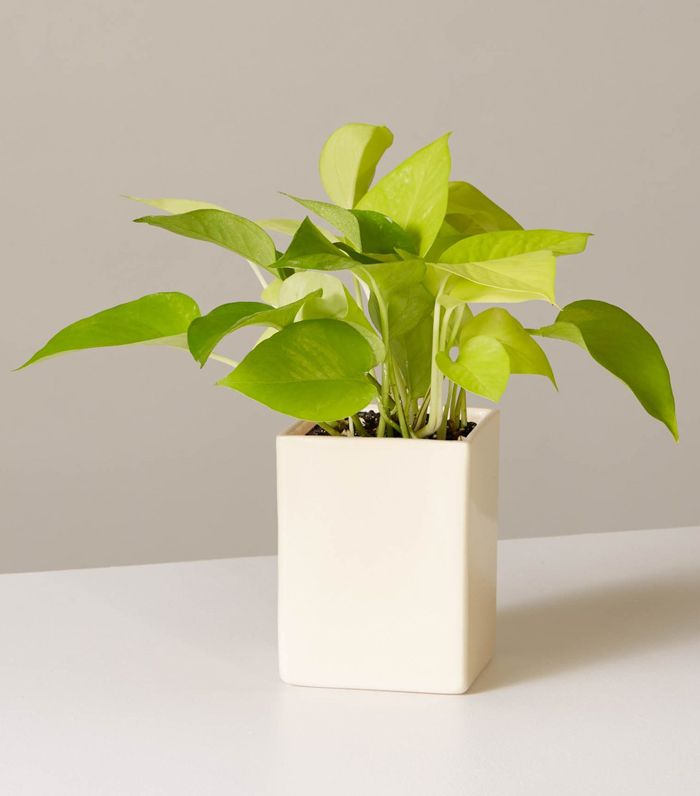 The Best Desk Plants To Breathe New Life Into Your Space