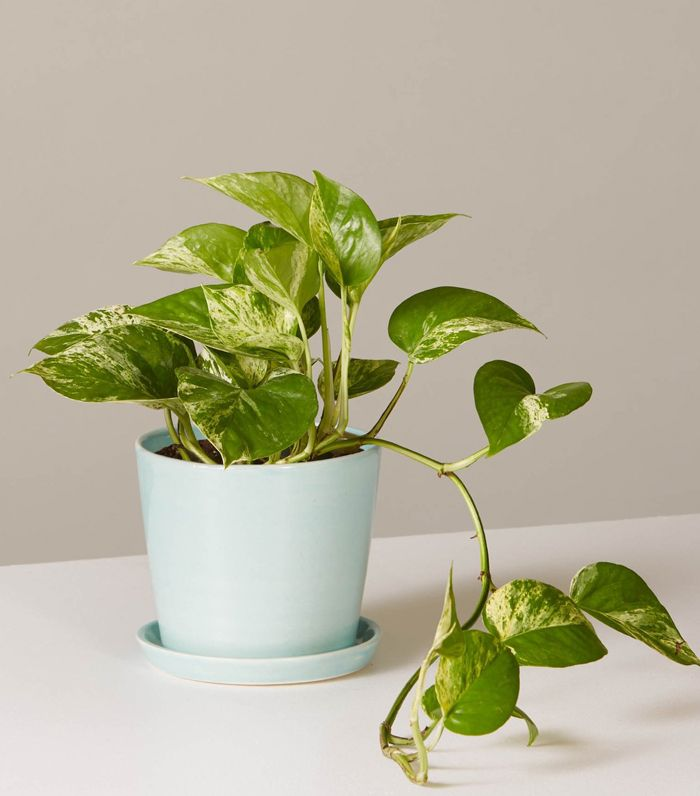 No Lie: These 7 Indoor Plants for Low-Light Actually Thrive in Darkness
