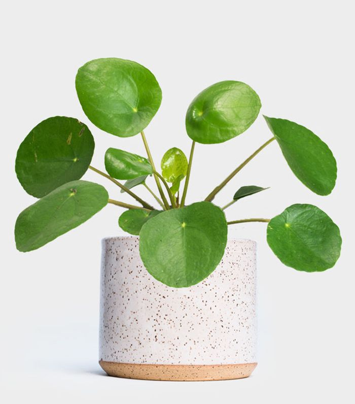 7 Indoor Plants For Low Light That Crave Darkness Mydomaine