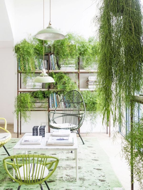 the 10 best indoor hanging plants that thrive in apartments mydomaine