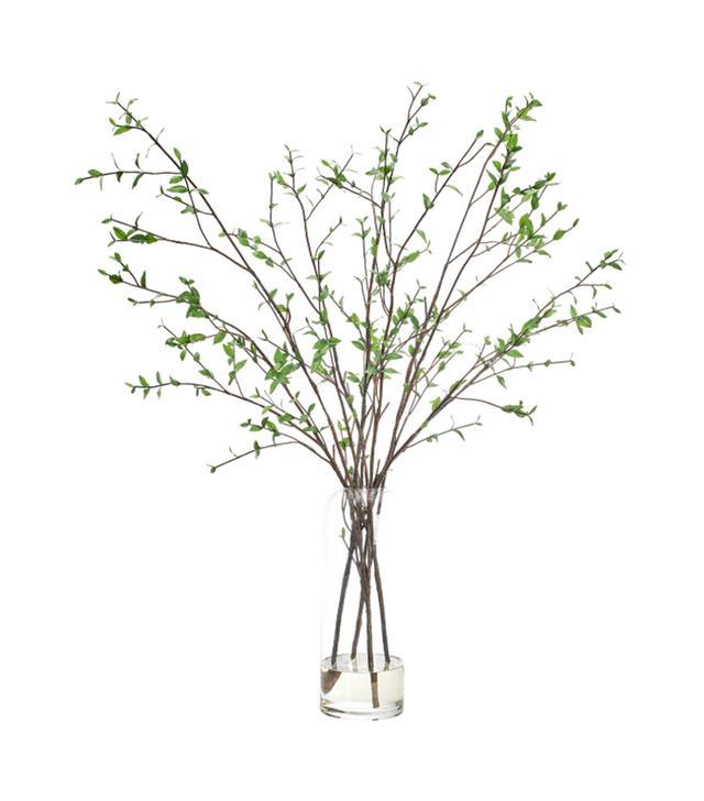 NDI Ligustrum Branch