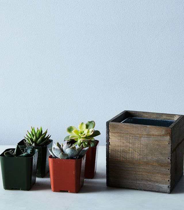 Shop Succulents DIY Mini Succulent Garden