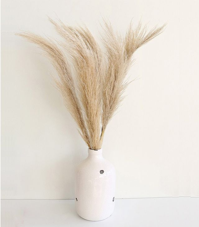 Afloral Dried Natural Pampas Grass