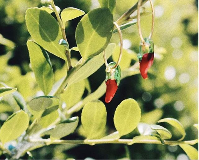 italian Jewelry Brand with Peppers