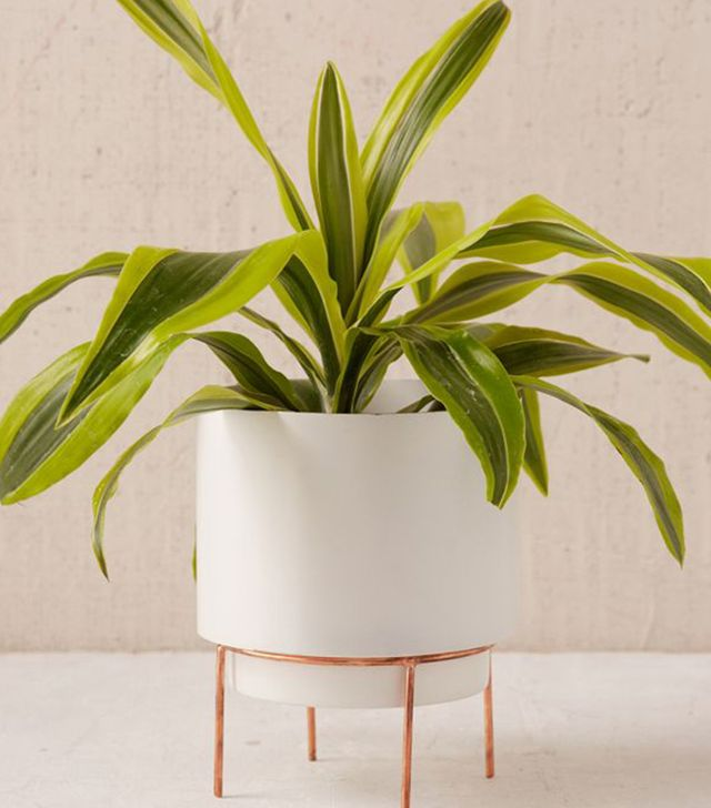 Urban Outfitters Adelphi 6 Planter