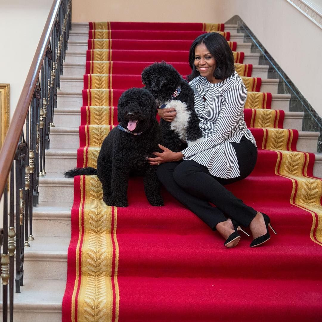 42 Photographs of Cute Pets (and Their Celeb Mother and father) That Are Making Us Smile 15