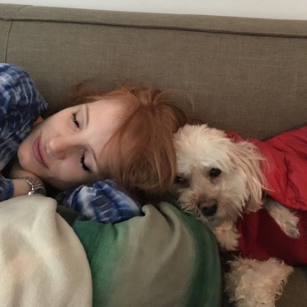 42 Photographs of Cute Pets (and Their Celeb Mother and father) That Are Making Us Smile 28