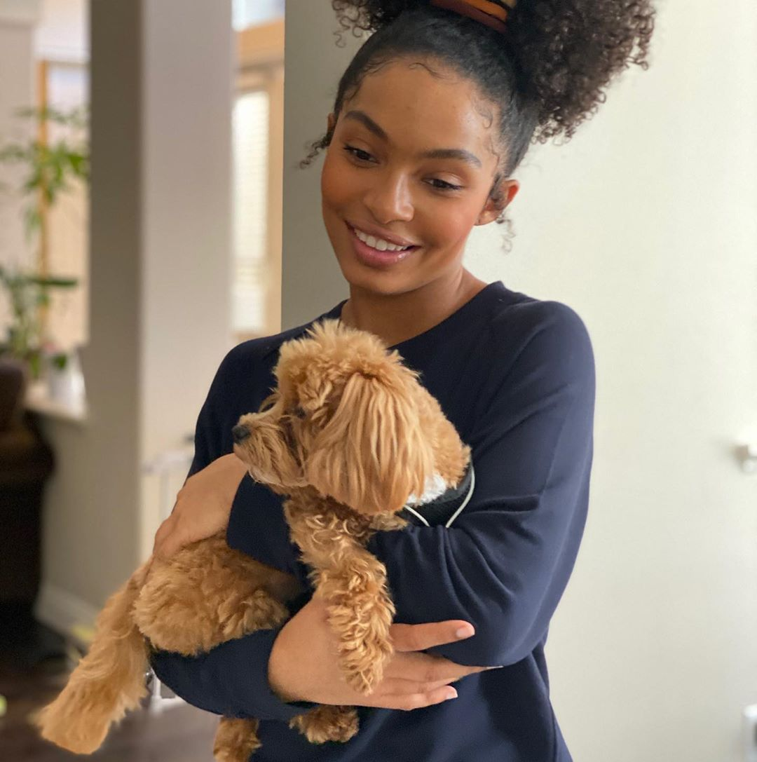 42 Photographs of Cute Pets (and Their Celeb Mother and father) That Are Making Us Smile 40