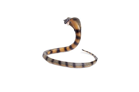 The Jungle Store Cobra Figurine