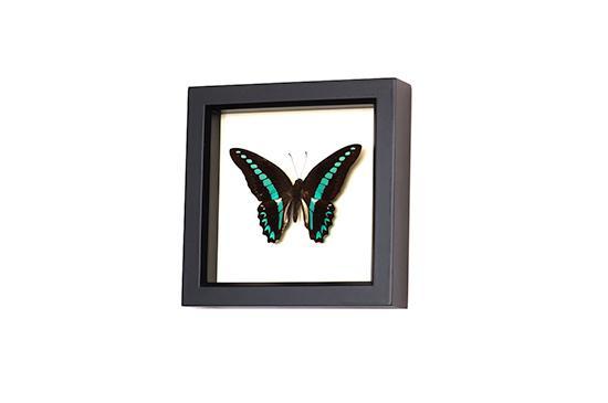 Etsy Framed Butterfly