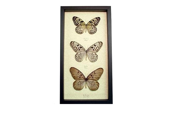 Etsy Framed Butterflies