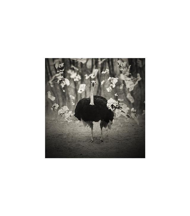 """Citizen Atelier """"Animaly 22"""" by Krzysztof Wladyka in 40"""" x 40"""""""