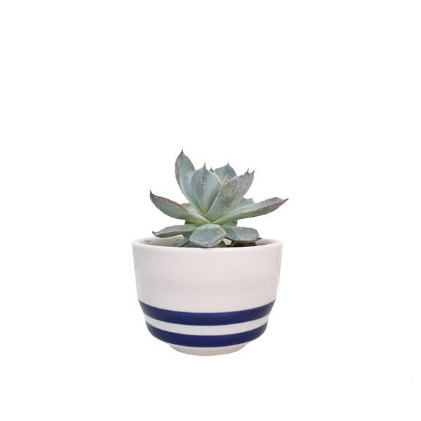 HoneyOlive Striped Mini Ceramic Pot Plant Kit