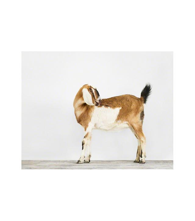 The Animal Print Shop Nubian Goat Print