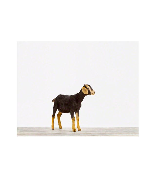 The Animal Print Shop Baby Goat Print