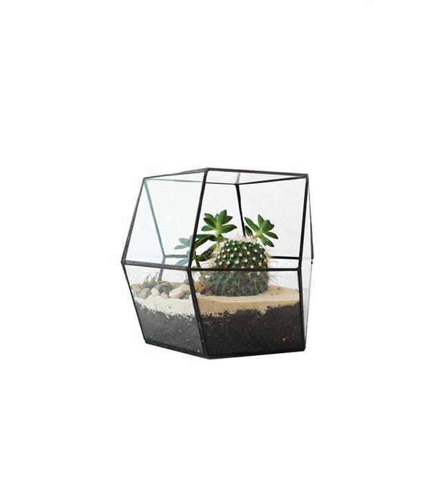 Living Room Glass Rhombic Terrarium