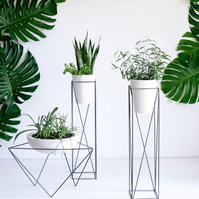 The Best Plant Stands on the Market