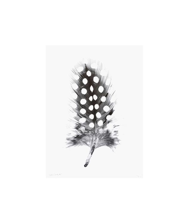 """Feather Study #1"" by Barloga Studios"
