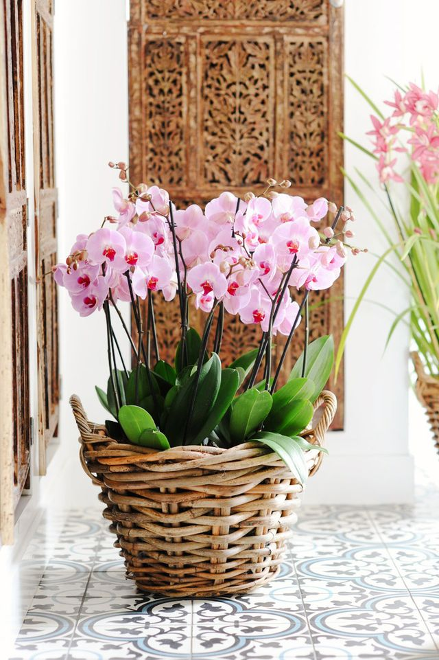 How to Keep an Orchid Alive