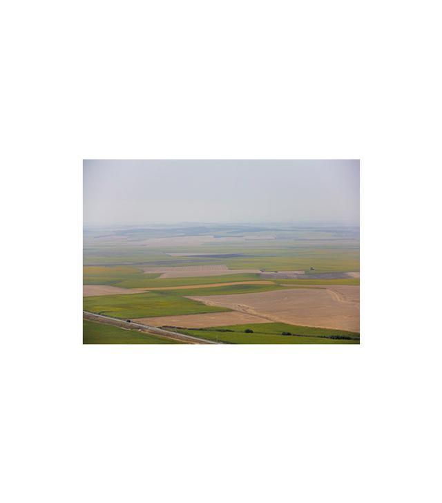 """Green Fields"" by Shay Spaniel"