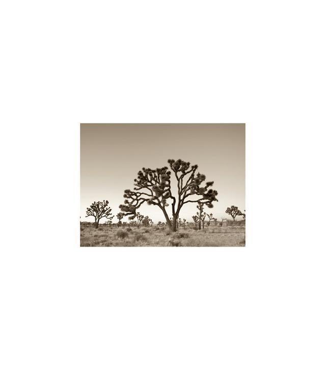 """California, Joshua Tree National Park"" by Michele Falzone"