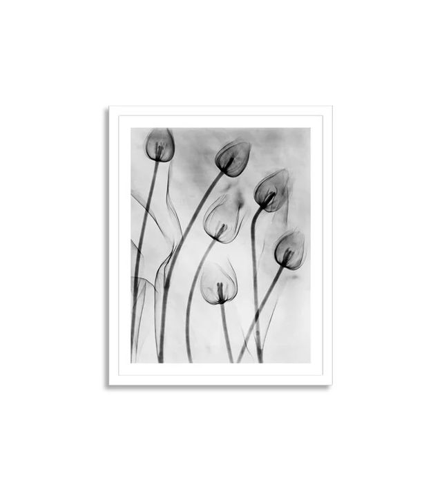 Getty Images Le Grice, X-ray of Tulips on White