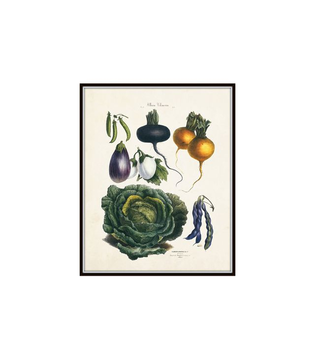 Belle Botanica French Vegetable Print No. 21