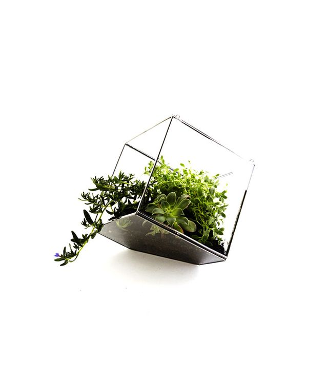 The Twenty Two Glass Geometric Terrarium