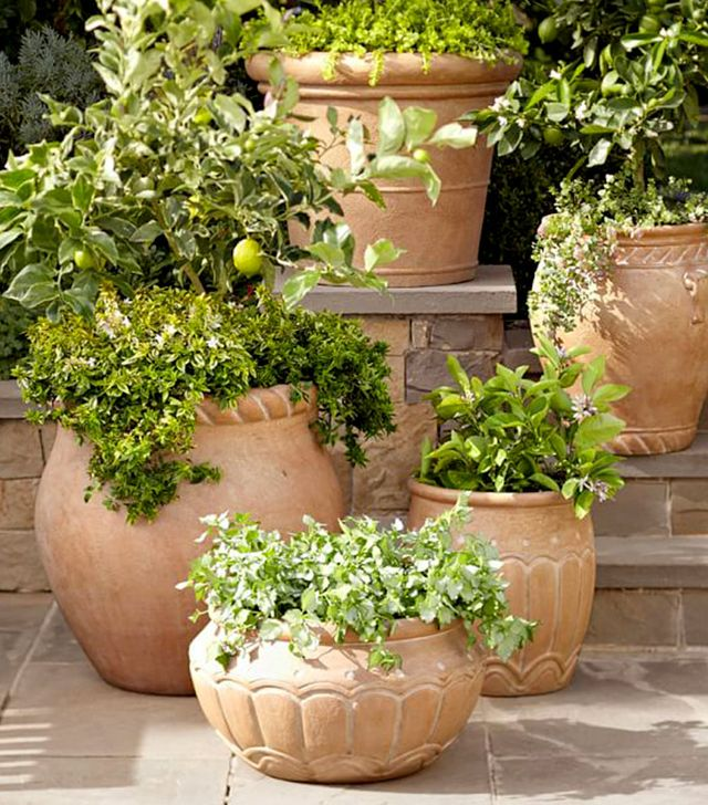 Pottery Barn Umbria Planters 99 and up