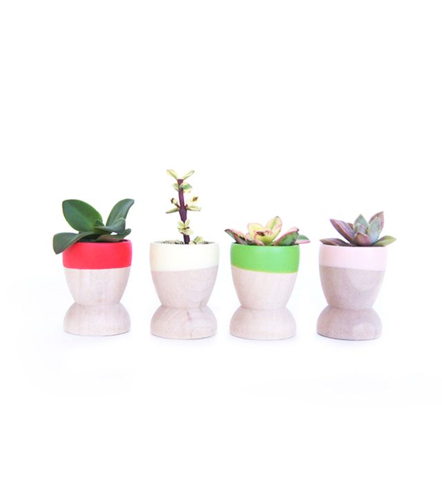 Wind & Willow Home Mini Planters