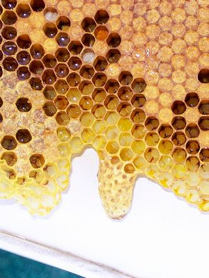 Royal Jelly: The Magic Ingredient Missing From Your Beauty Regimen