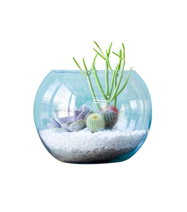 Terrain Fishbowl Terrarium