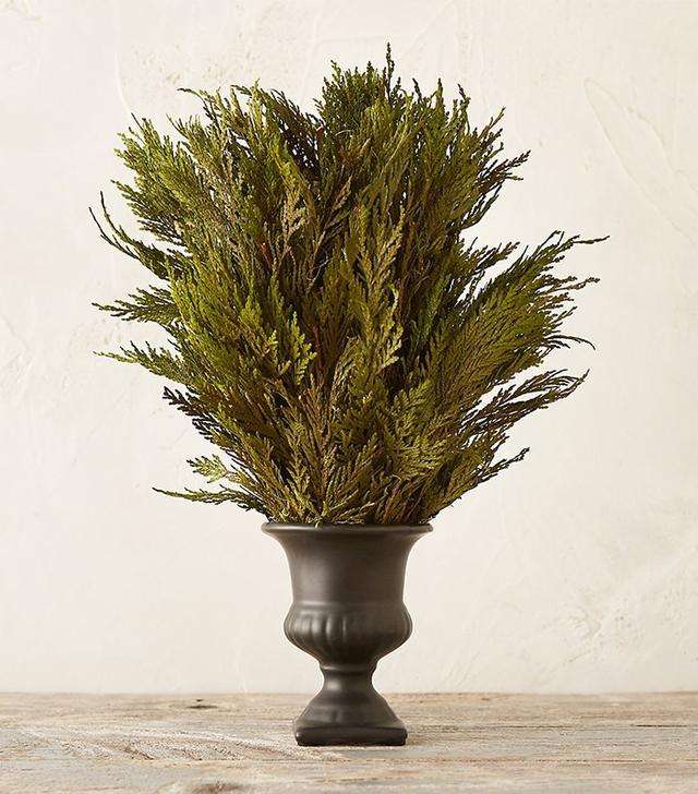 Terrain Preserved Cedar Topiary
