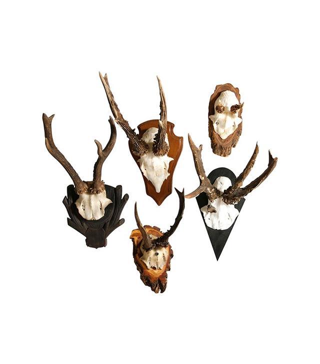 Dot & Bo Vintage Antler Hunting Trophy