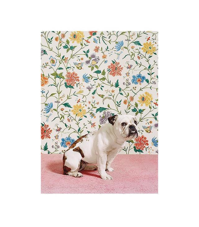 Catherine Ledner Bulldog1 Print