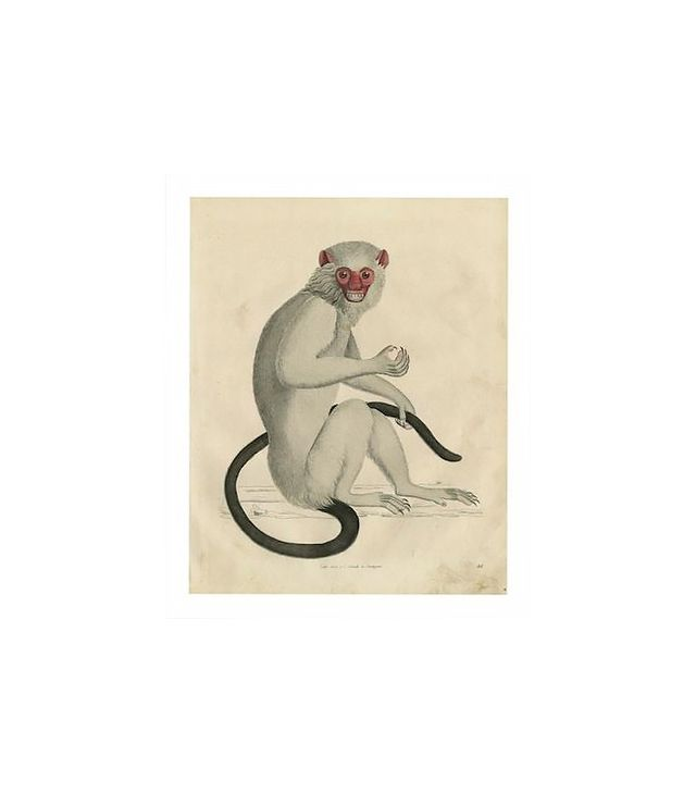 Vintage Vintage Monkey Archival Print