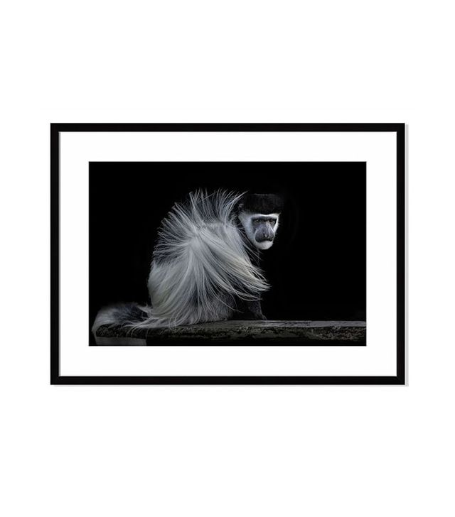 Offset for West Elm Colobus Monkey by Sue Demetriou