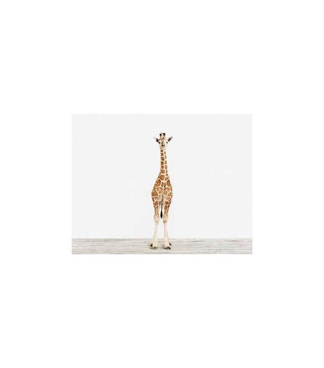 The Animal Print Shop Baby Giraffe No.3
