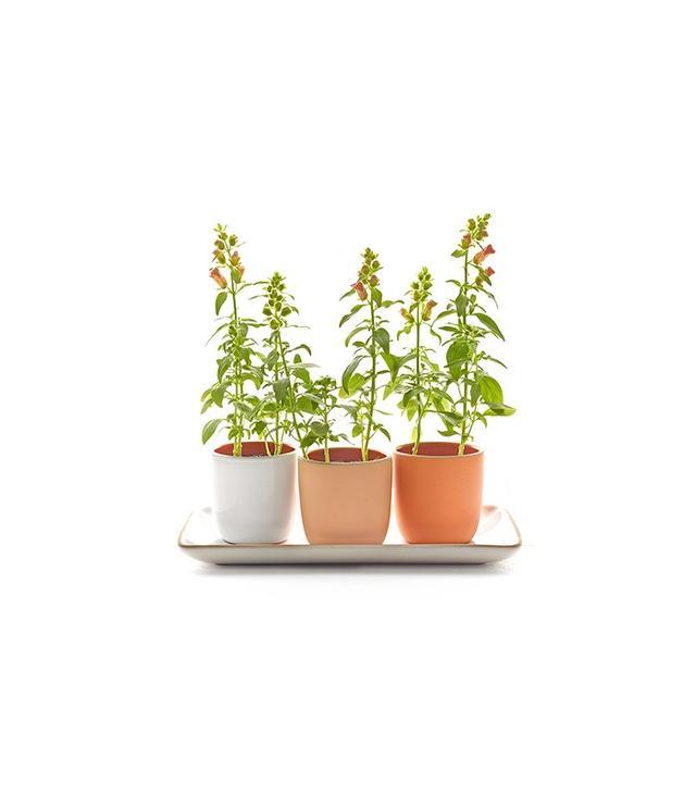 Heath Ceramics Summer Planter Set