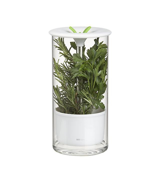 Crate and Barrel Glass Herb Keeper