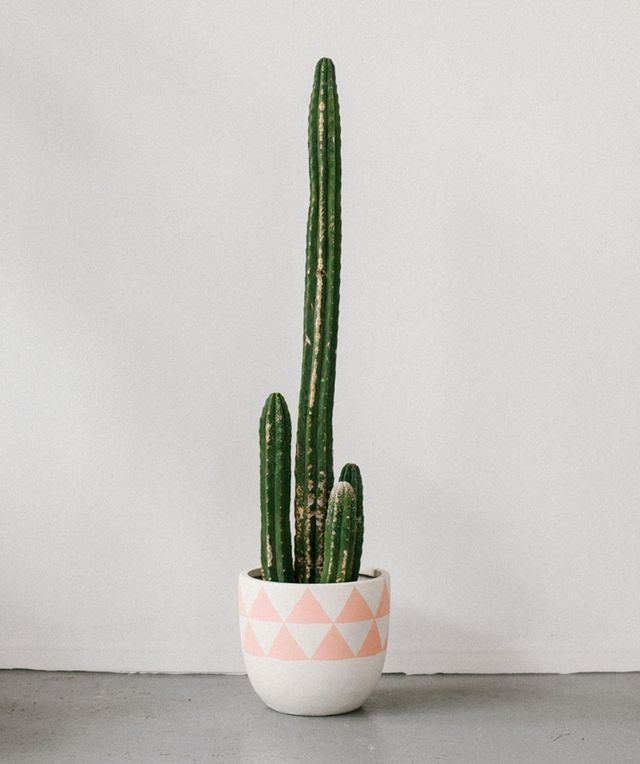 Pop & Scott Peach Aztec Pot
